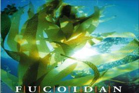 Fucoidan – Món quà mới từ thiên nhiên