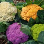 6 thực phẩm lý tưởng giúp giảm cân trong mùa thu