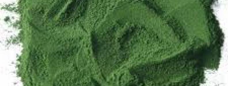 Một số tác dụng mới nhất được biết đến của Tảo Spirulina